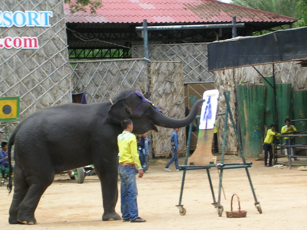 You Ll Find Many Different Elephant Parks In Northern Thailand And