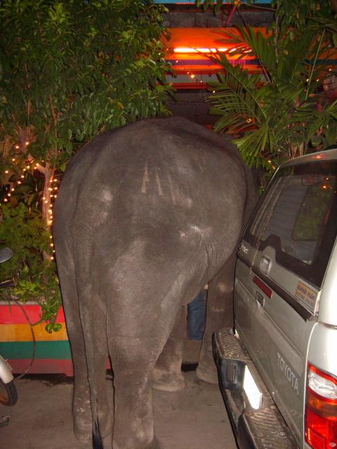 Sex Escort in Ayutthaya