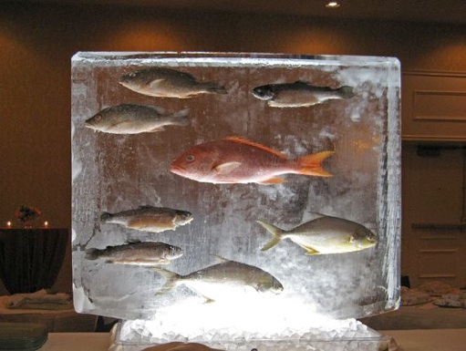 The fish thread page 64 for Best frozen fish