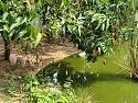 pond331