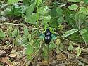 01blackbug