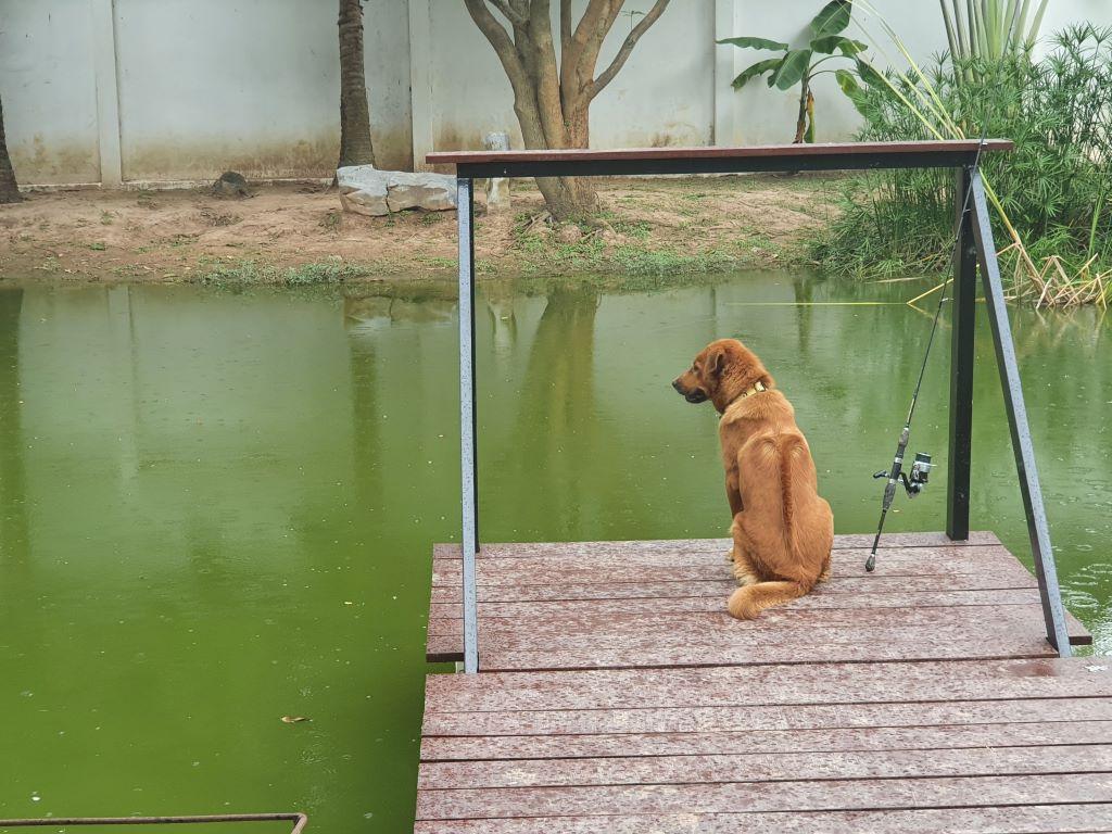 pond629