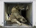 Street Art-gd-2-png