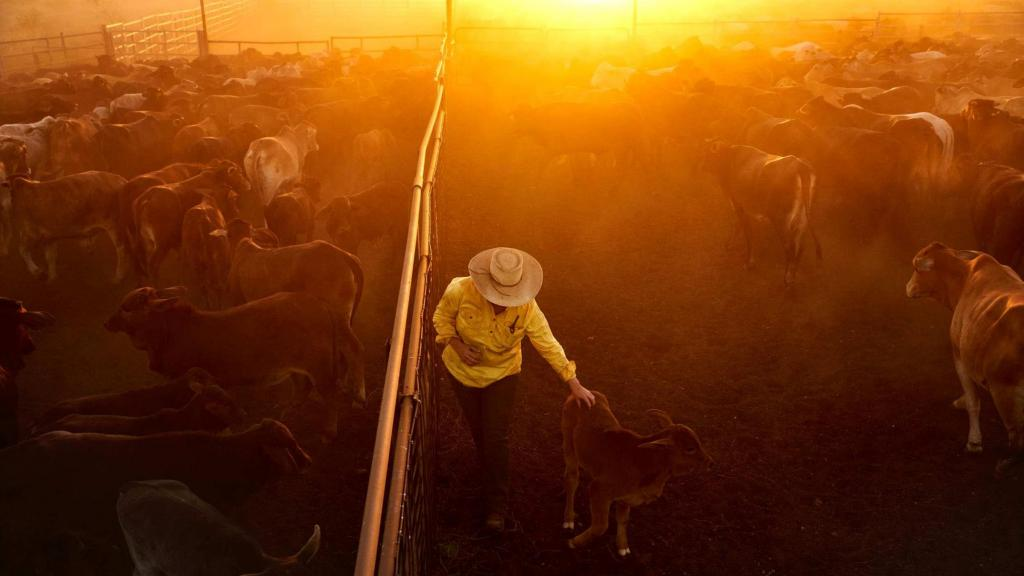 Woman in the Outback step forward - Not a Farmer's Wife-9981866-16x9-2150x1210-jpg