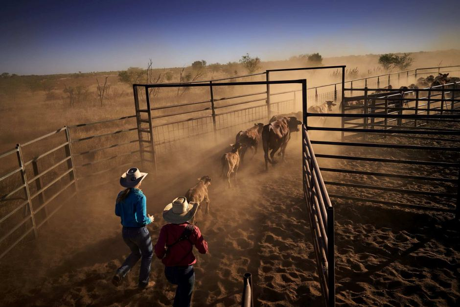 Woman in the Outback step forward - Not a Farmer's Wife-9981562-3x2-940x627-jpg