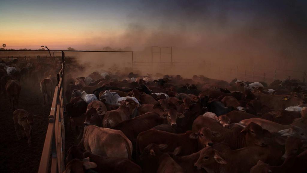 Woman in the Outback step forward - Not a Farmer's Wife-9981748-16x9-2150x1210-jpg