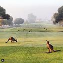 More images from a Wide Brown Land-screenshot_2019-07-13-matthew-dodd-instagram