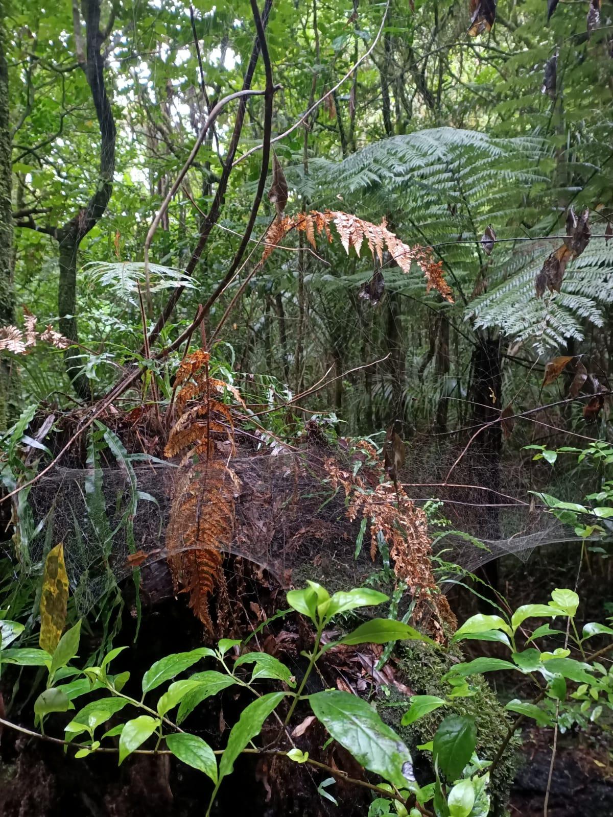 A bit of hiking on Mount Pirongia, Waikato-whatsapp-image-2020-06-05-12-a