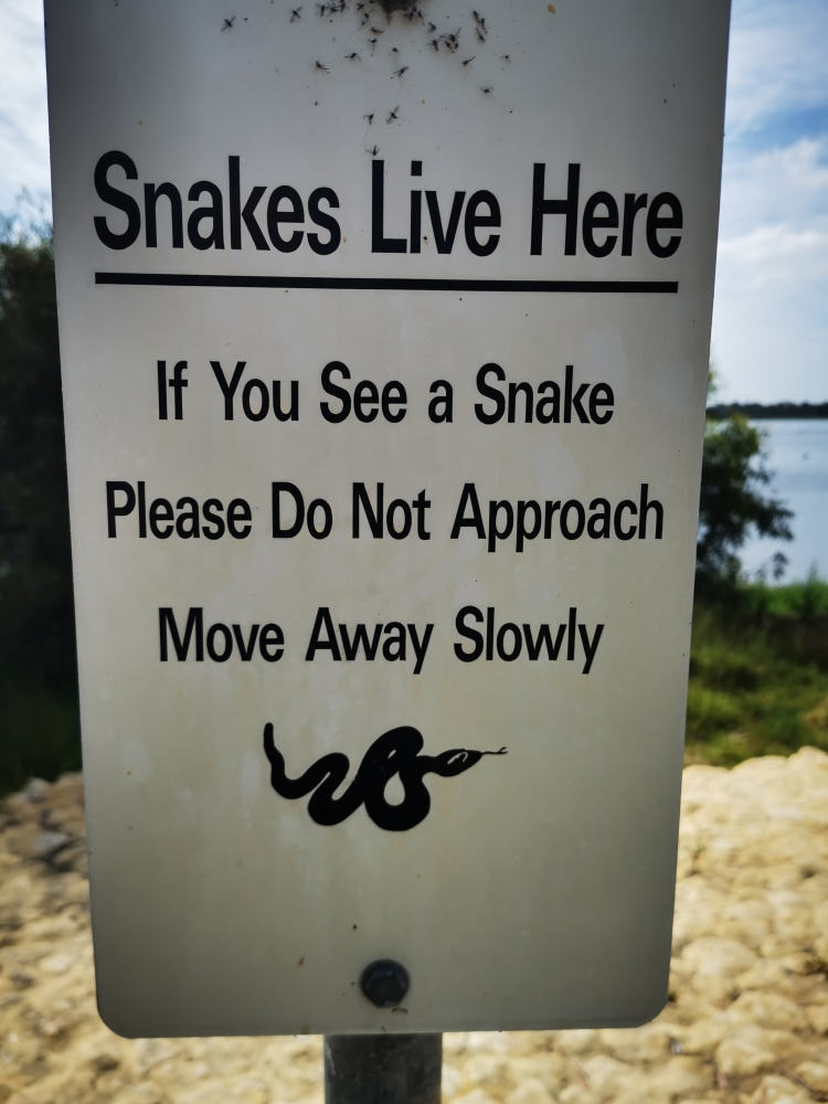From the 'Only in Australia' File #001-snakey-jpg
