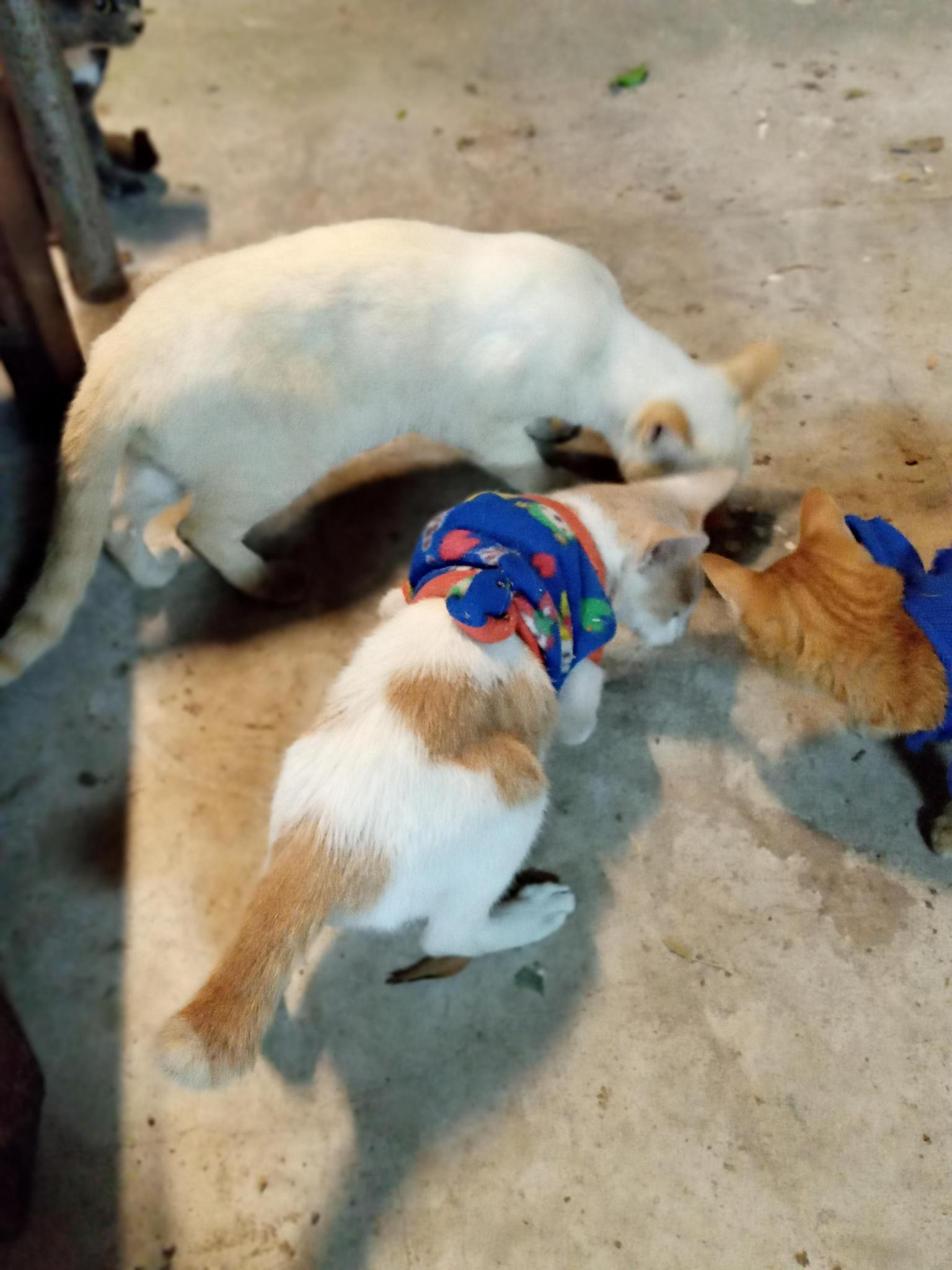 The Holiday Car Port Build with balls and cats-culpre-jpg