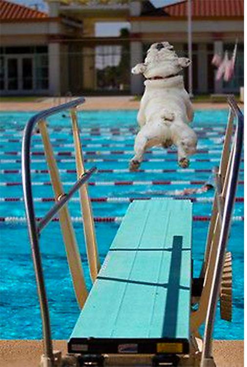 Pool Plans-screenshot_2020-06-19-q-did-what