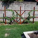 DIY ...inexpensive, strong grape arbor.-dscf0765-jpg
