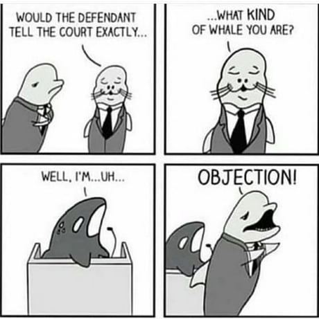 Amusing Pictures ripped from the Net-killerwhale-jpg