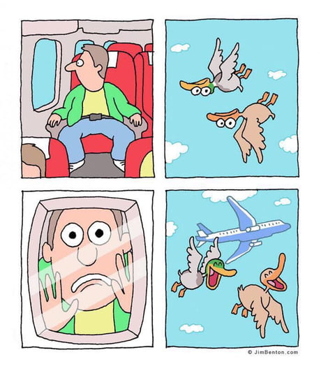 Amusing Pictures ripped from the Net-birds-jpg