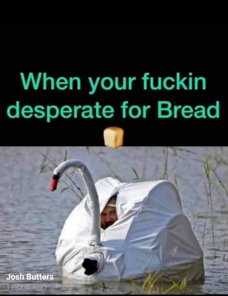 Amusing Pictures ripped from the Net-swanbread-jpg