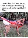 Amusing Pictures ripped from the Net-2fce36d6-7e6a-4e1d-a6ae-b410ba8fda59-jpeg
