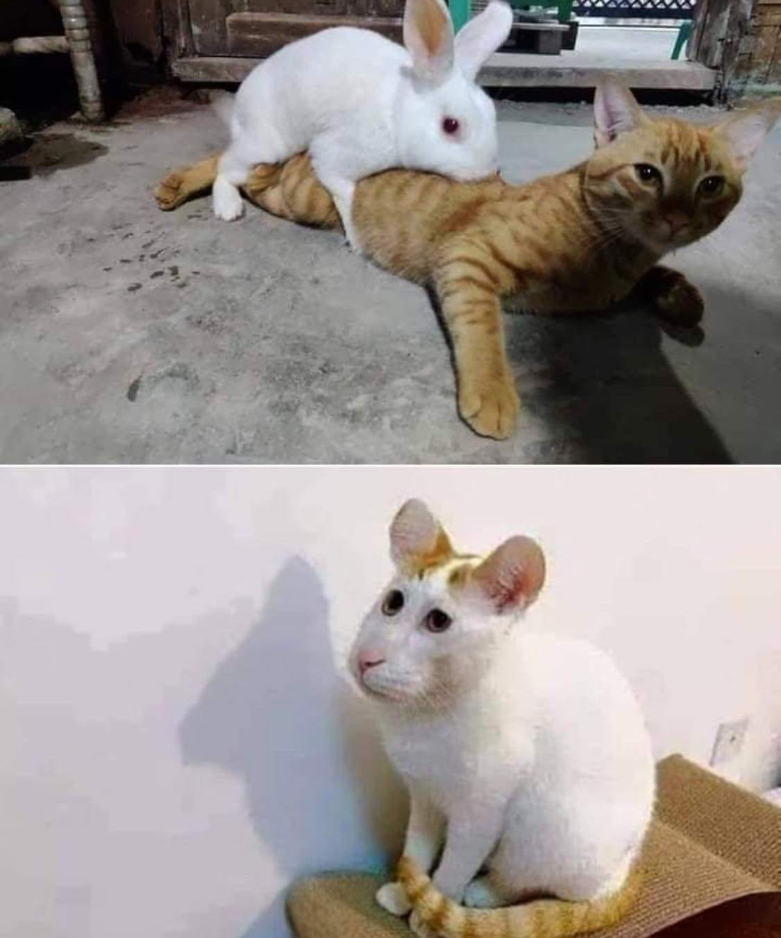 Amusing Pictures ripped from the Net-rabbit-cat-kid-jpg