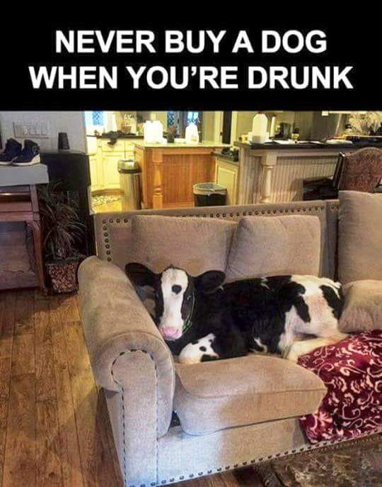 Amusing Pictures ripped from the Net-never-buy-dog-when-youre-drunk