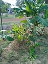 What's in your garden?-20-jpg