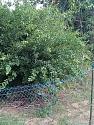 What's in your garden?-25-jpg