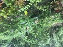 What's in your garden?-a4108946-d6a0-43d9-bea9-031251b9a402-jpg