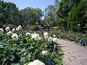 What's in your garden?-1402230011-jpg