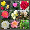 What's in your garden?-img_0566-jpg