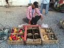 Any rare chickens breed sellers in Essan ?-thai-2015-051-jpg