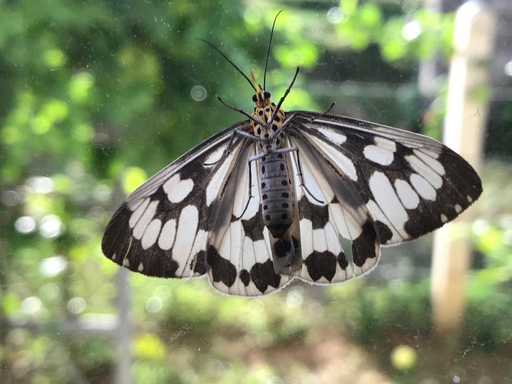 Thai Butterfly Photos-img_6037-jpg