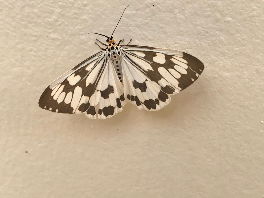 Thai Butterfly Photos-img_6038-jpg