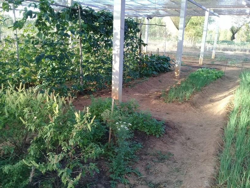 What's in your garden?-20200104_073810-jpg