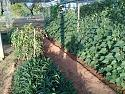 What's in your garden?-20200104_073849-jpg