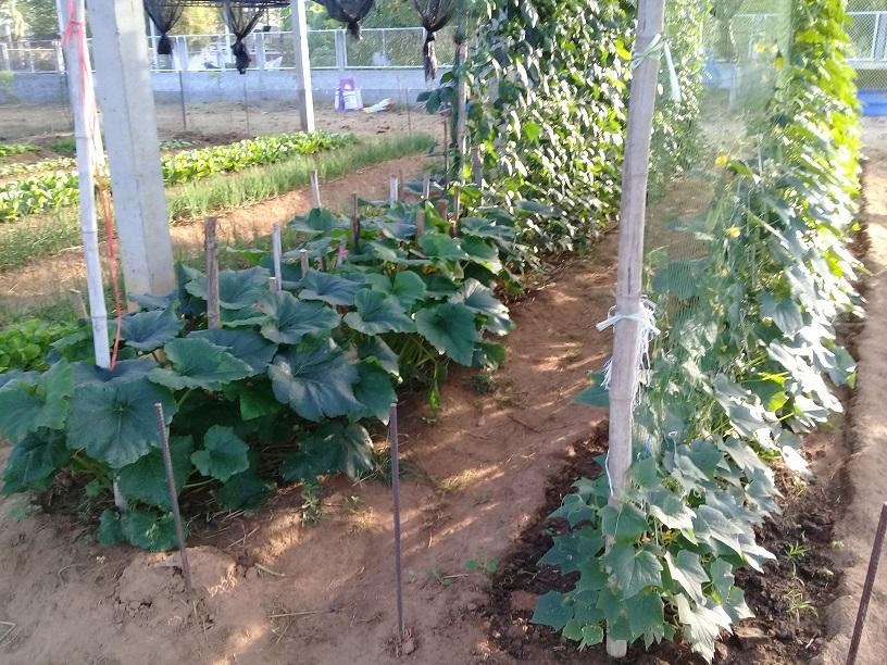 What's in your garden?-20200104_073927-jpg
