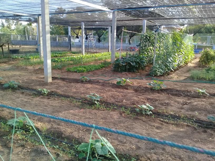 What's in your garden?-20200104_074619-jpg