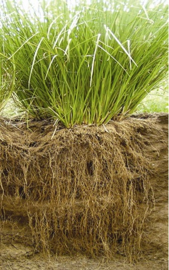 What plants to keep soil from washing away?-c0ee09fd-d421-4937-9385-3263c74f234b-jpeg