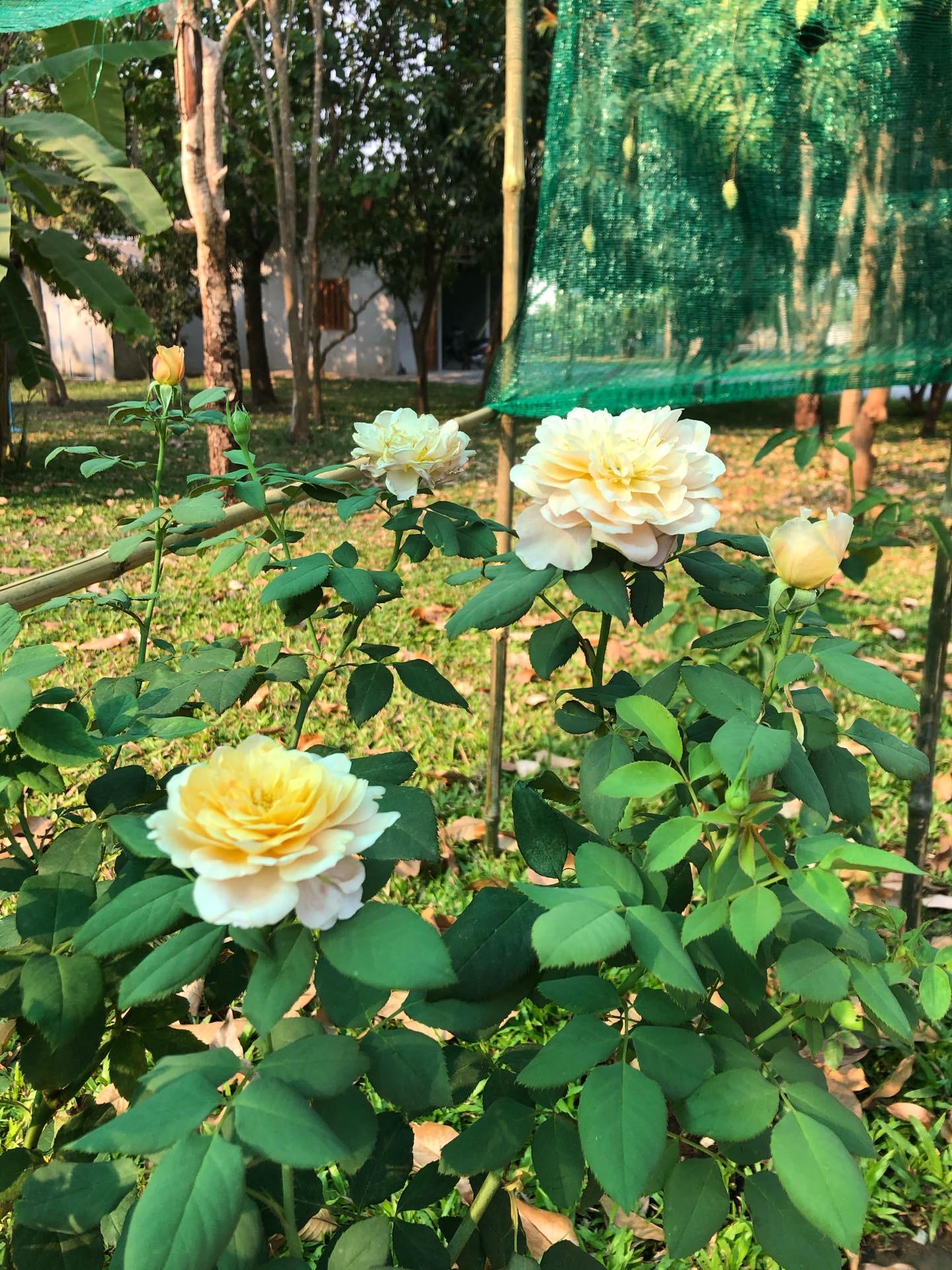 What's in your garden?-0f3aee05-c92e-4640-ac3f-2481458c9e9f-jpeg