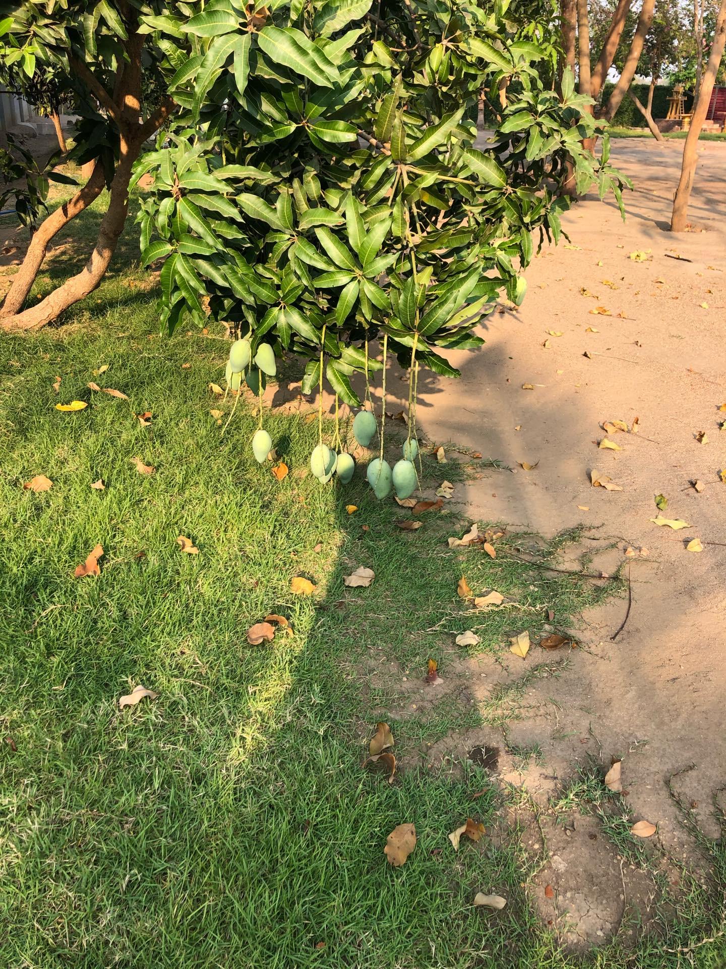 What's in your garden?-ef9d6101-ec3c-48e5-b809-ff88ae4bbe24-jpeg
