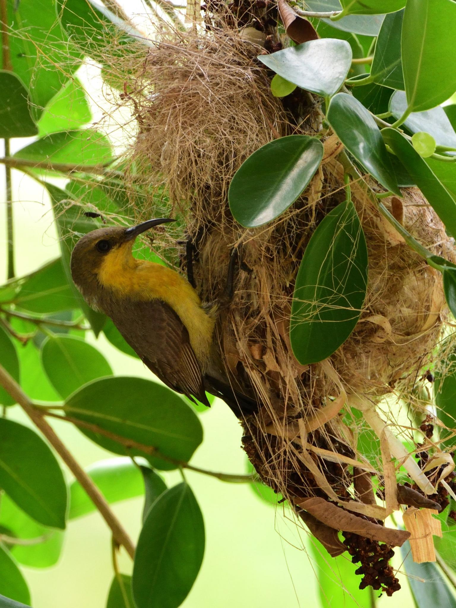 Thailand bird photos-jrh_1002_00002-jpg