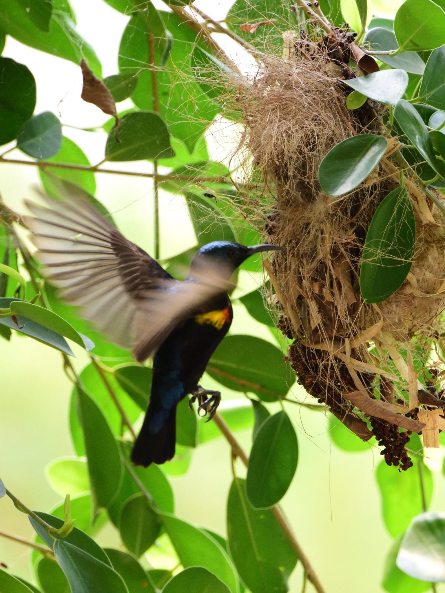 Thailand bird photos-jrh_1026_00002-jpg