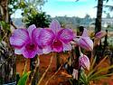 Bloom Baby Bloom!-img20200401064923-jpg