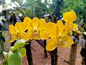 Bloom Baby Bloom!-img20200401065145-jpg