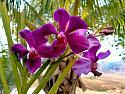 Bloom Baby Bloom!-img20200401065247-jpg