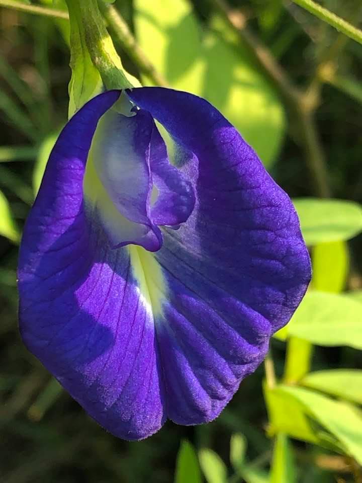What's in your garden?-74172724_2559321880820177_7008764093037281280_n-jpg