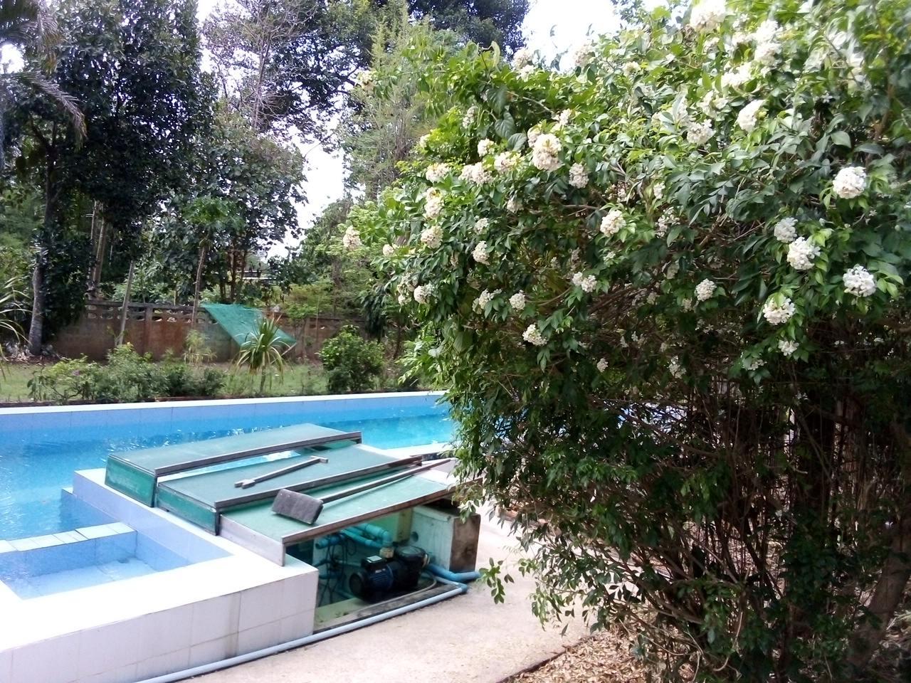 What's in your garden?-img_20200506_174451-jpg