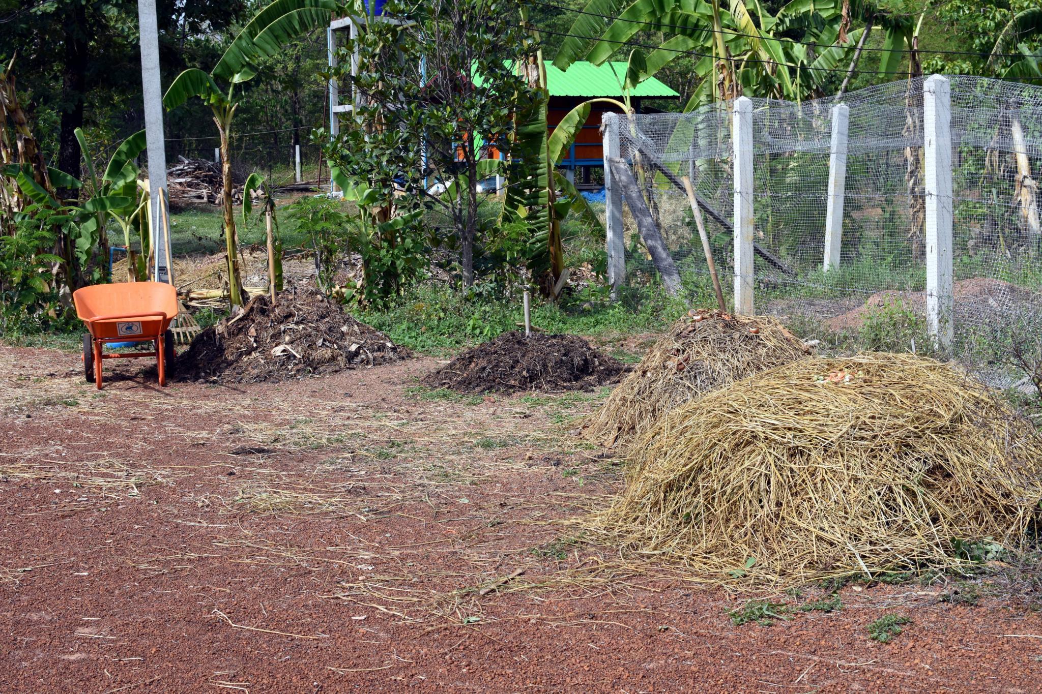 What's in your garden?-compost_heaps_1250-jpg