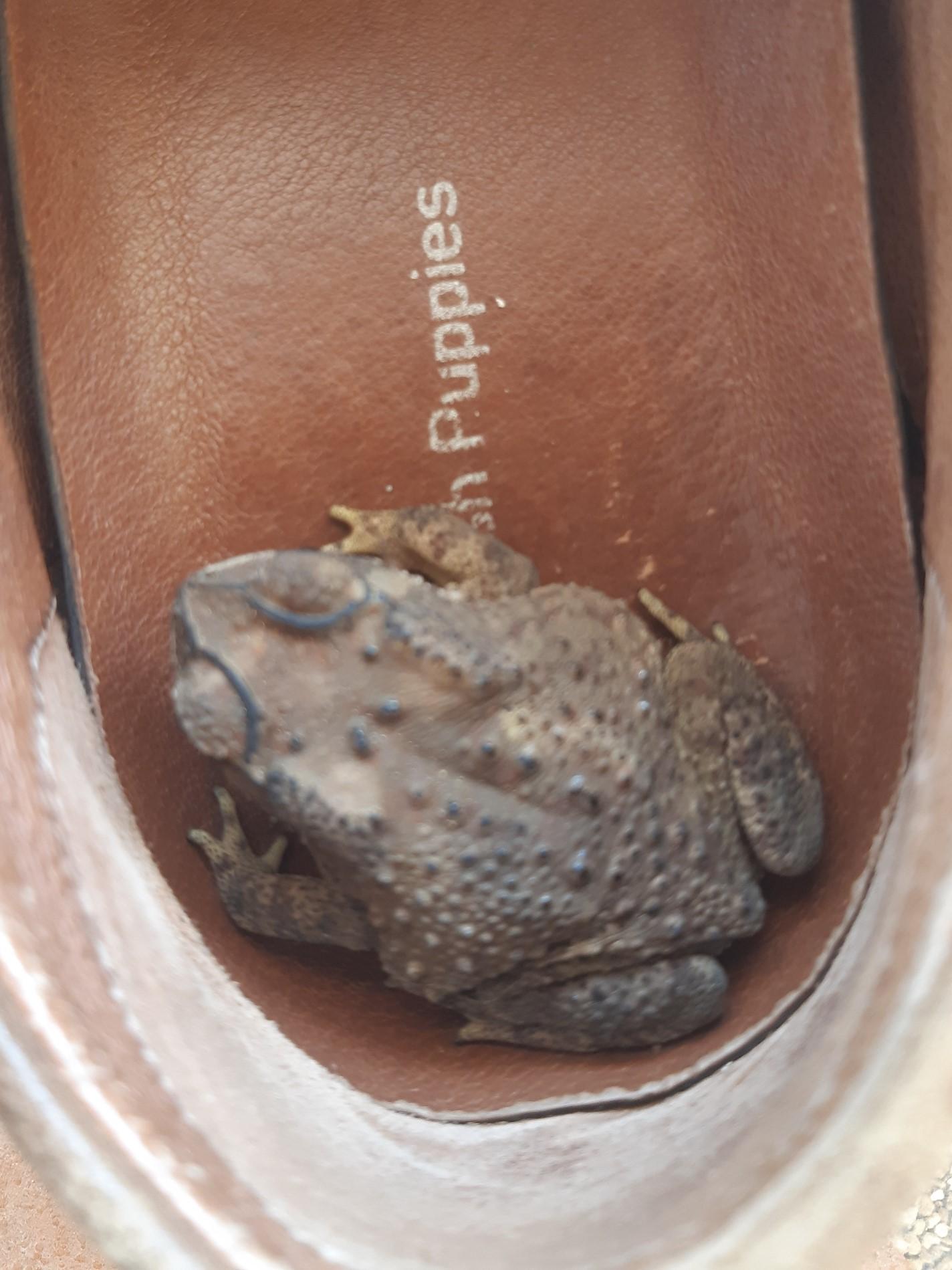 What's in your garden?-toad2-jpg