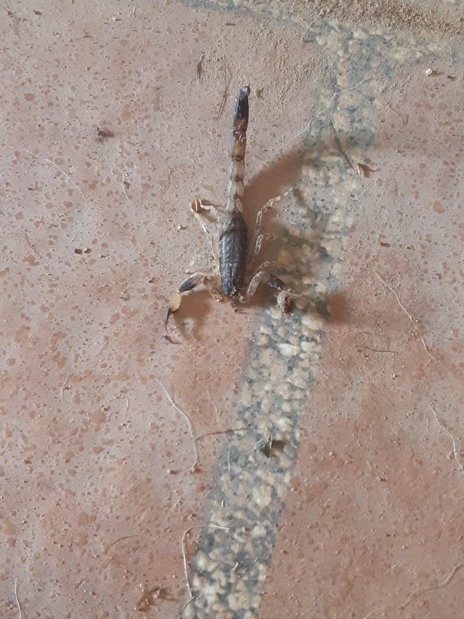 What's in your garden?-scorpion3-jpg