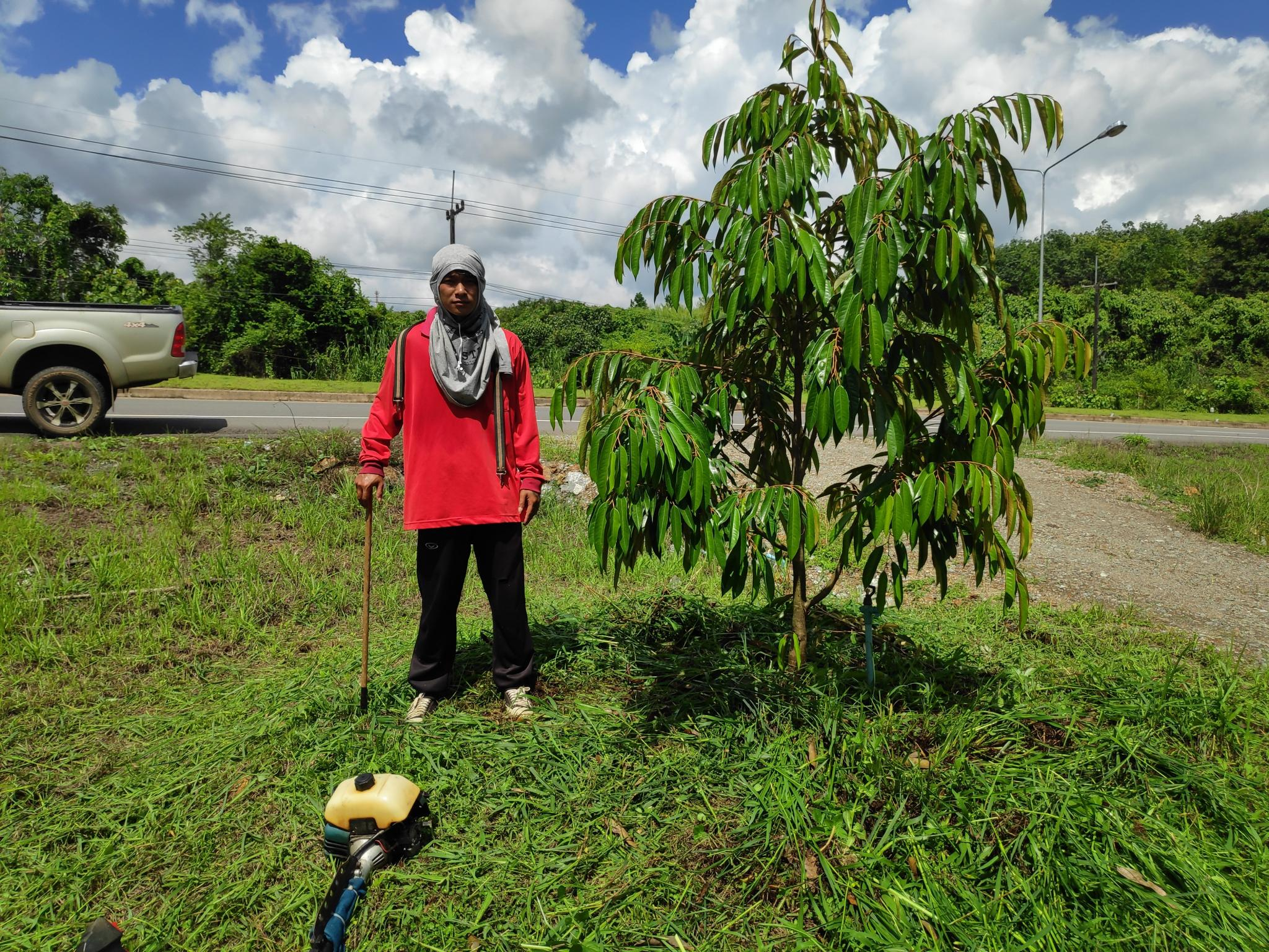 Switching from rubber to fruit trees-durian2-jpg