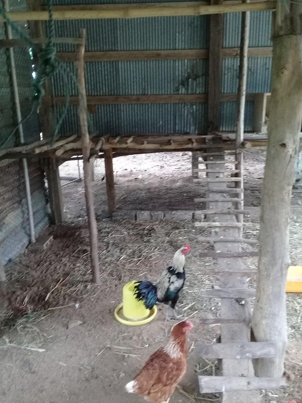 My Splendid Cock-chk_10-jpg