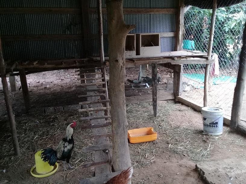 My Splendid Cock-chk_12-jpg